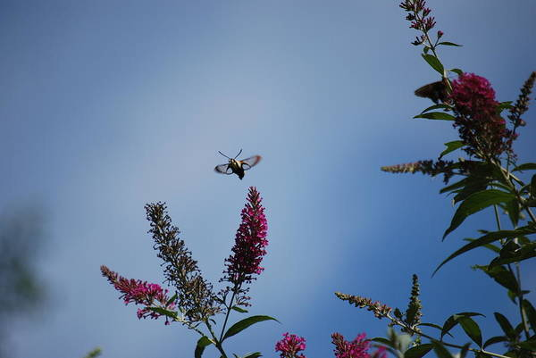 Photograph - Looking For A Place To Land by Lori Tambakis