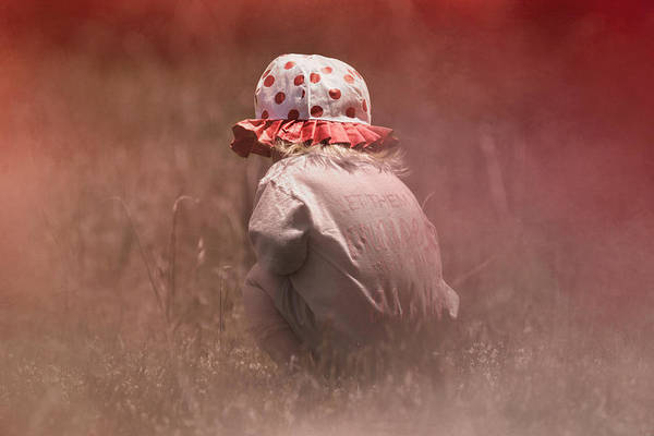 Photograph - Looking For Flowers by Jai Johnson