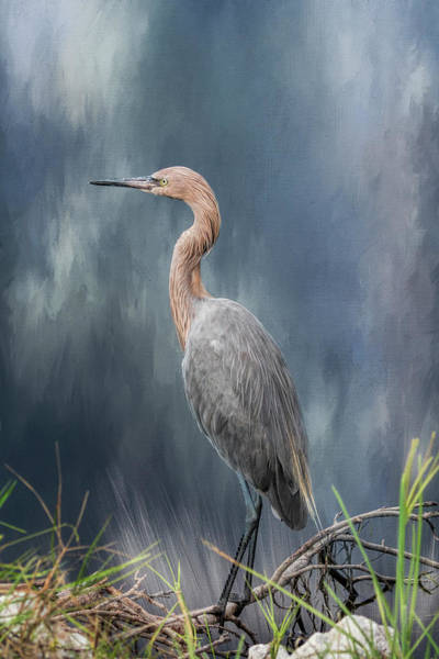 Egret Photograph - Looking For Food by Kim Hojnacki