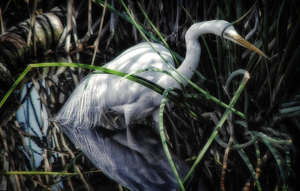 Photograph - Looking For Lunch by Elaine Malott
