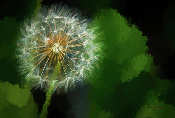 Dandelion Puff Photograph - Looking For Wind by Marvin Spates