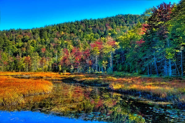 Photograph - Looking North Of Cary Lake by David Patterson