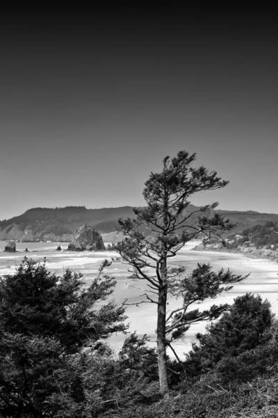 Photograph - Looking North To Cannon Beach by David Patterson