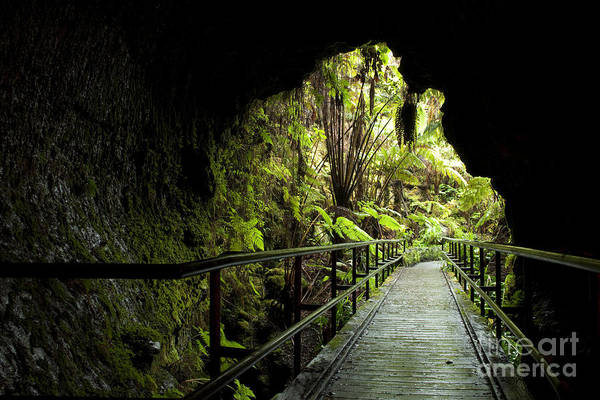 Photograph - Looking Out Of Thurston Lava Tube by Charmian Vistaunet
