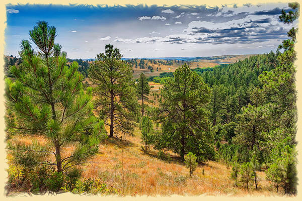 Photograph - Looking Through Custer State Park by John M Bailey