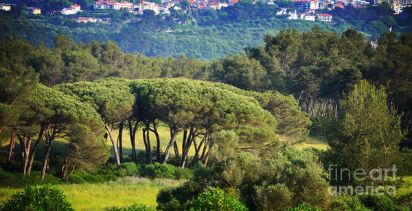 Sintra Photograph - Looking Towards Sintra by Mary Machare