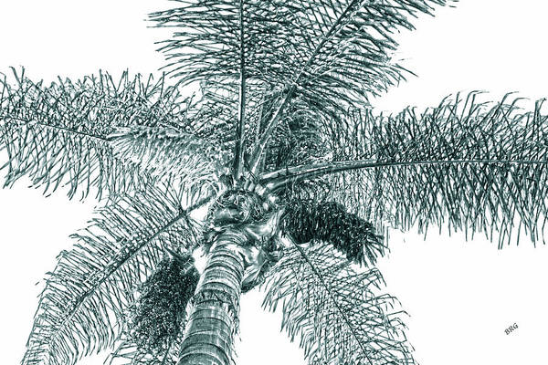 Photograph - Looking Up At Palm Tree Green by Ben and Raisa Gertsberg