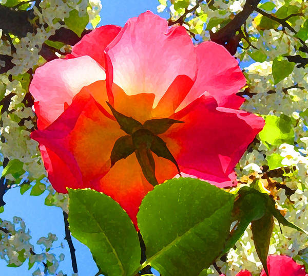 Orange Rose Photograph - Looking Up At Rose And Tree by Amy Vangsgard