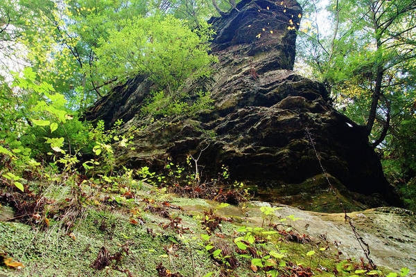 Photograph - Looking Up At The Cliff by Mike Murdock