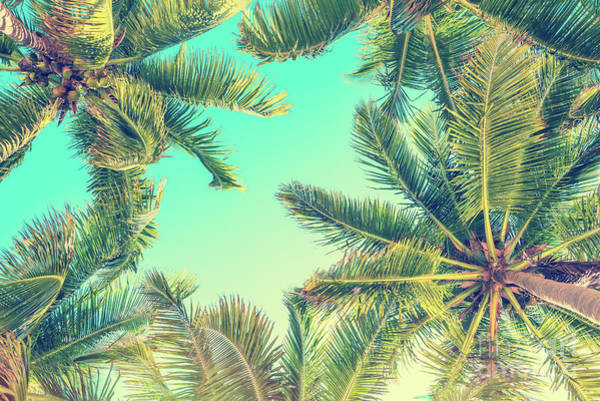 Coconut Trees Photograph - Looking Up by Delphimages Photo Creations