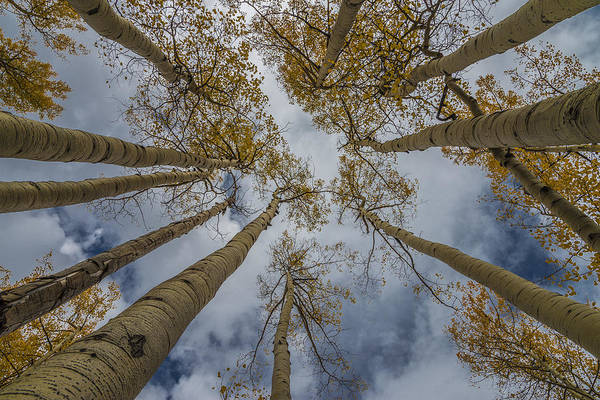 Photograph - Looking Up by Gary Lengyel