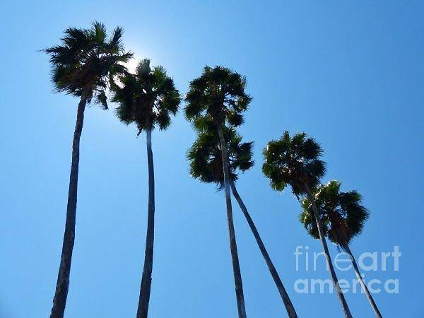Photograph - Looking Up On Playa Madera by Rosanne Licciardi