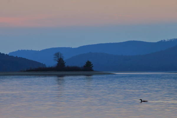 Wall Art - Photograph - Loon At Quabbin Reservoir by John Burk