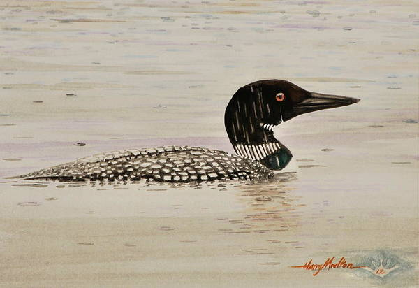 Painting - Loon In The Rain by Harry Moulton
