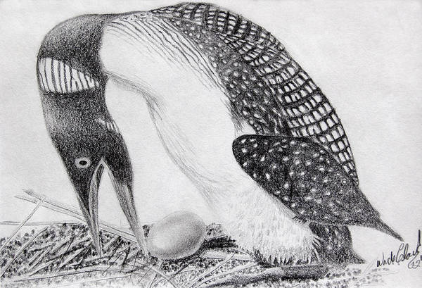 Drawing - Loon Mother by Wade Clark