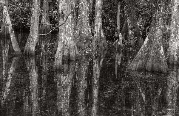 Photograph - Loop Road Swamp #5 by Michael Kirk