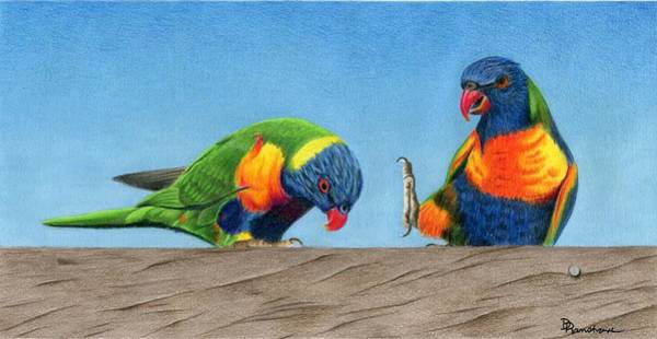 Green Parrot Drawing - Lorikeets by Diana Ranstrom