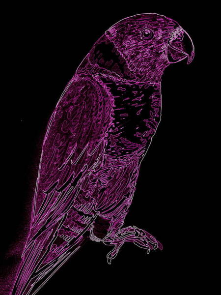 Twitcher Wall Art - Painting - Lorri In Hot Magenta And Black by Cathy Jacobs