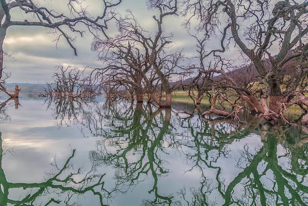 Photograph - Los Vaqueros Oaks by Marc Crumpler
