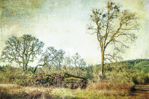 Photograph - Losing A Part Of Oneself by Belinda Greb