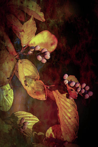 Photograph - Lost Autumn Berries 6043 Ldp_2 by Steven Ward