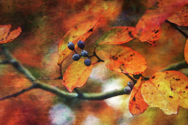 Photograph - Lost Autumns Beauty 6570 Ldp_2 by Steven Ward