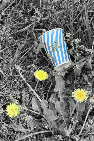 Photograph - Lost Cup by Cate Franklyn