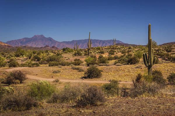 Photograph - Lost Dutchman State Park Saguaros by Andy Konieczny