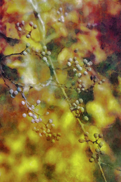 Photograph - Lost Fall Berries 7183 Ldp_2 by Steven Ward