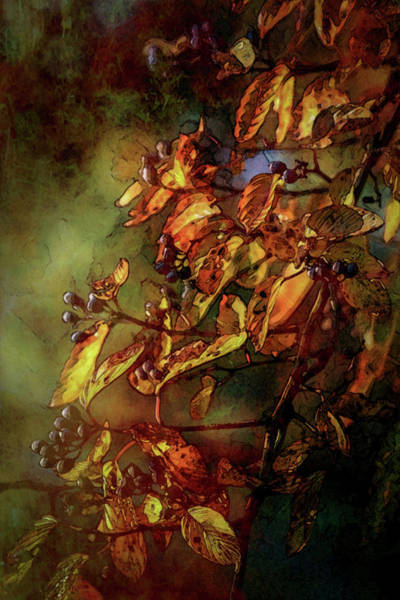 Photograph - Lost Fall Berry Cascade 6049 Ldp_2 by Steven Ward