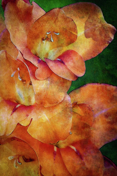 Photograph - Lost Flame Glads 3055 Ldp_2 by Steven Ward