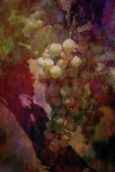 Photograph - Lost Grapes At River Ridge Winery Digital Watercolor 2695 Lw_2 by Steven Ward