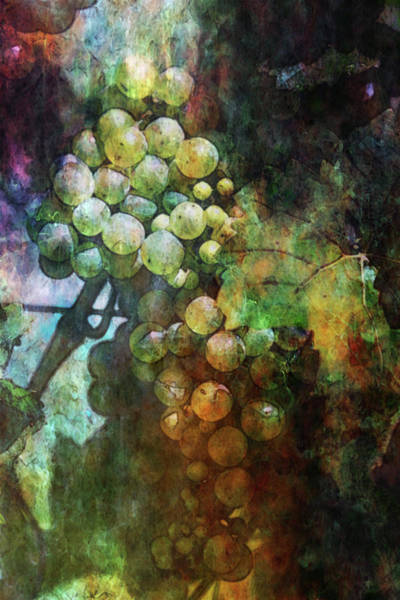 Photograph - Lost Grapes Digital Painting 2676 Ldp_2 by Steven Ward
