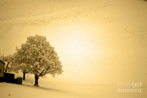 Wall Art - Photograph - Lost In Snow - Winter In Switzerland by Susanne Van Hulst