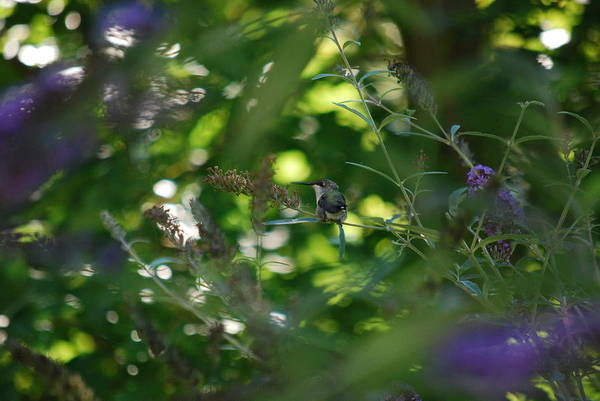 Photograph - Lost In The Greenery by Lori Tambakis
