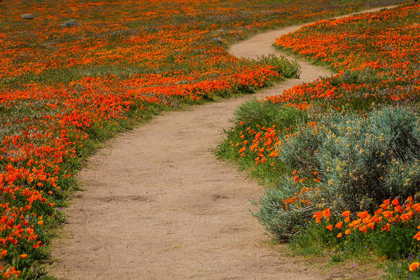 California Poppy Photograph - Lost In The Poppy Field by Garry Gay