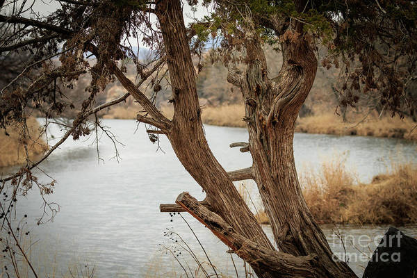 Photograph - Lost Lake Shoreline by Richard Smith