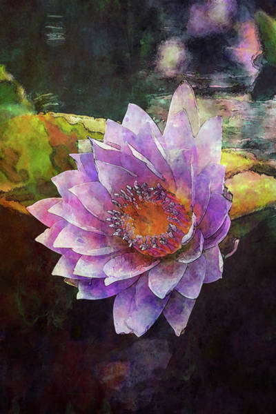 Photograph - Lost Lavender Lotus Blossom 4725 Ldp_2 by Steven Ward