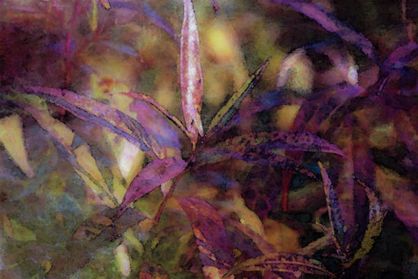 Photograph - Lost Leaves Decorated In Purple 6003 Ldp_2 by Steven Ward