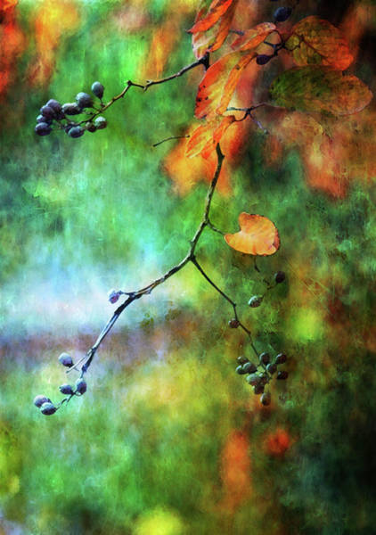 Photograph - Lost Purple Berries Of Autumn 6557 Ldp_2 by Steven Ward