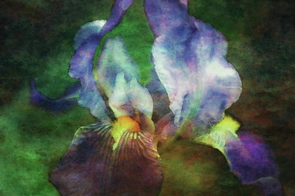 Photograph - Lost Purple Iris 9845 Ldp_2 by Steven Ward