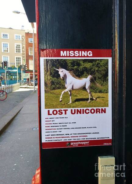 Photograph - Lost Unicorn by Rosanne Licciardi