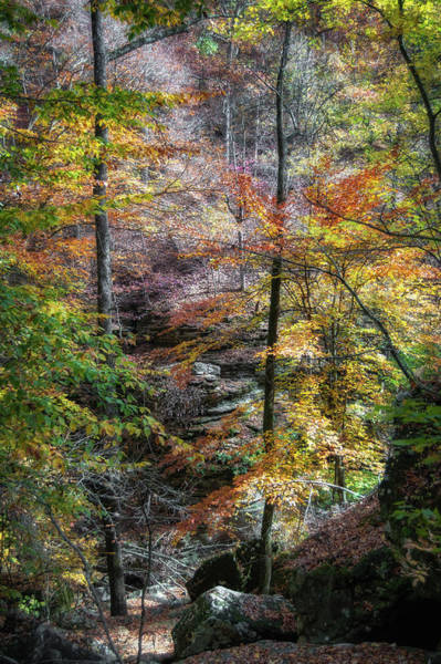 Lost River State Park Wall Art - Photograph - Lost Valley by James Barber