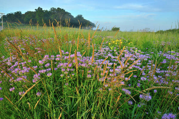 Photograph - Lost Valley Prairie In Glacial Park by Ray Mathis