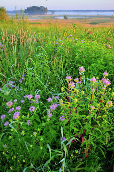 Photograph - Lost Valley Wildflowers And Wetlands At Sunrise In Glacial Park by Ray Mathis