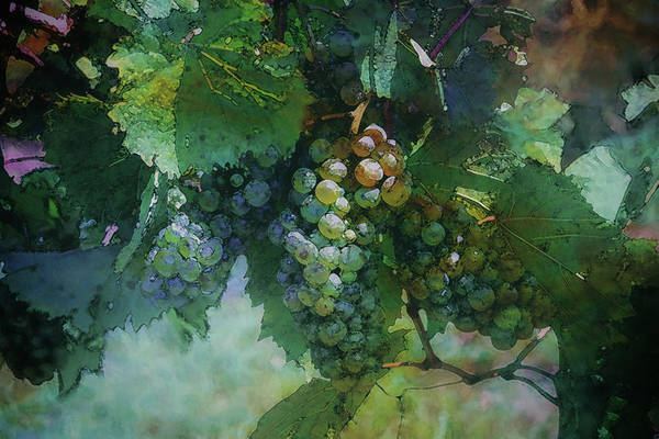 Photograph - Lost Wine Grapes River Ridge Winery 2728 Lw_2 by Steven Ward