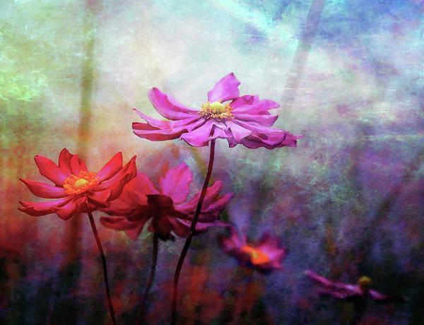 Photograph - Lost Wood Rose Against Aqua Sky 5556 Lw_2 by Steven Ward