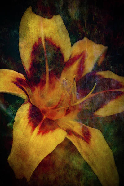 Photograph - Lost Yellow Flame Dancer Daylily Digital Painting 1276 Ldp_2 by Steven Ward