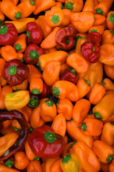 Photograph - Lots Of Peppers by Frank Wilson