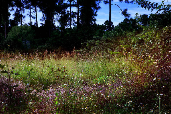 Ugly Photograph - Lots Of Weeds by Joseph G Holland